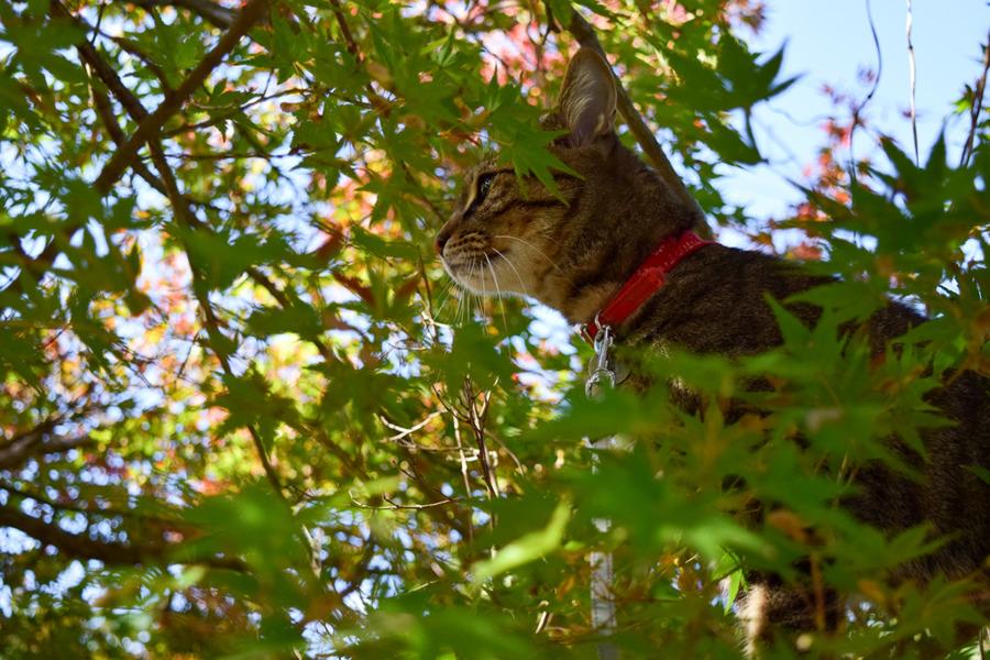 木に登って鳥を見る虎ノ介