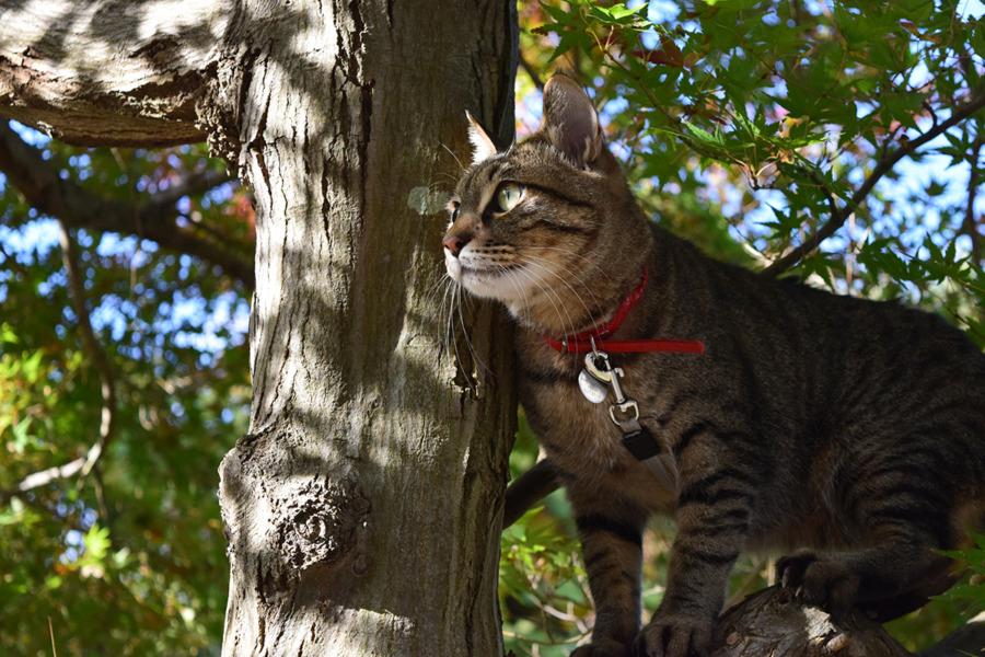 木に登って鳥を見つめる虎ノ介