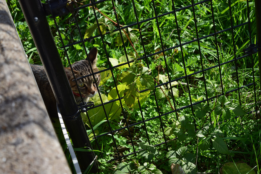 フェンスとブロックの隙間からフェンスの向こうにいく虎ノ介