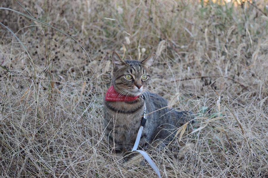 野良猫を見つけた虎ノ介