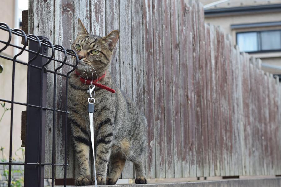 猫の匂いを嗅ぐ虎ノ介