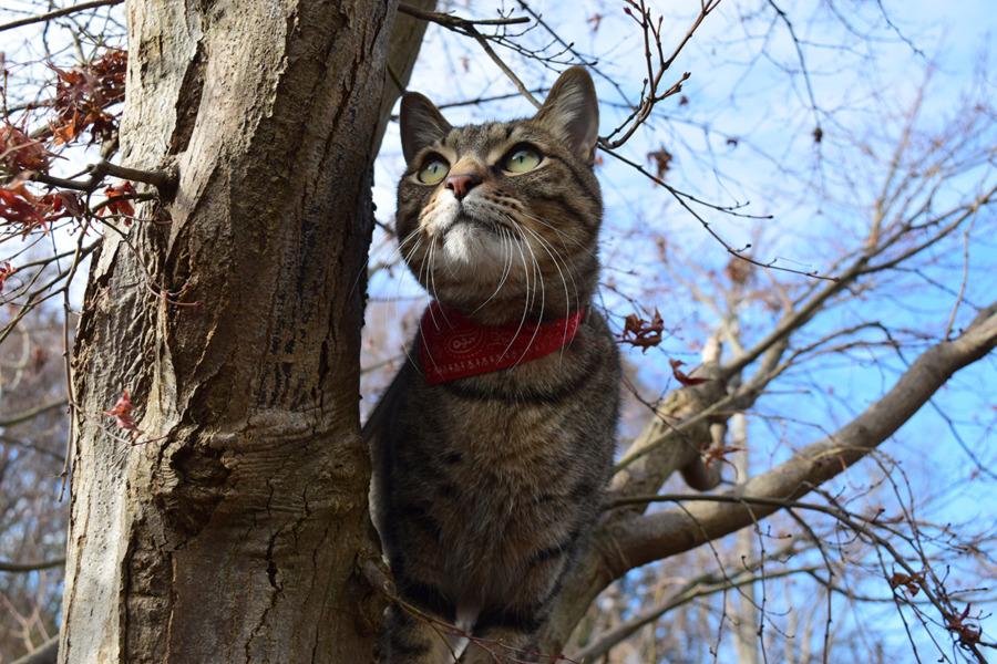 木登りをする虎ノ介