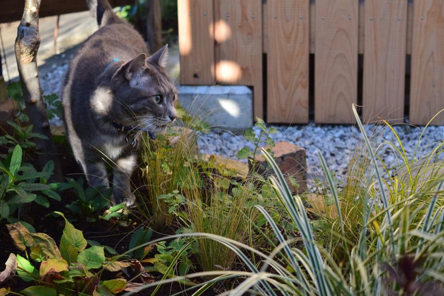 庭で草を食べる春太