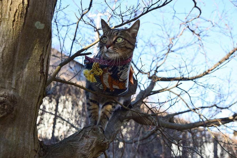 着物ケープをきて木登りをする虎ノ介