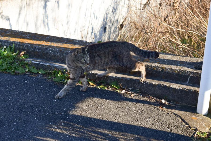 小さい頃の虎ノ介によく似た野良猫