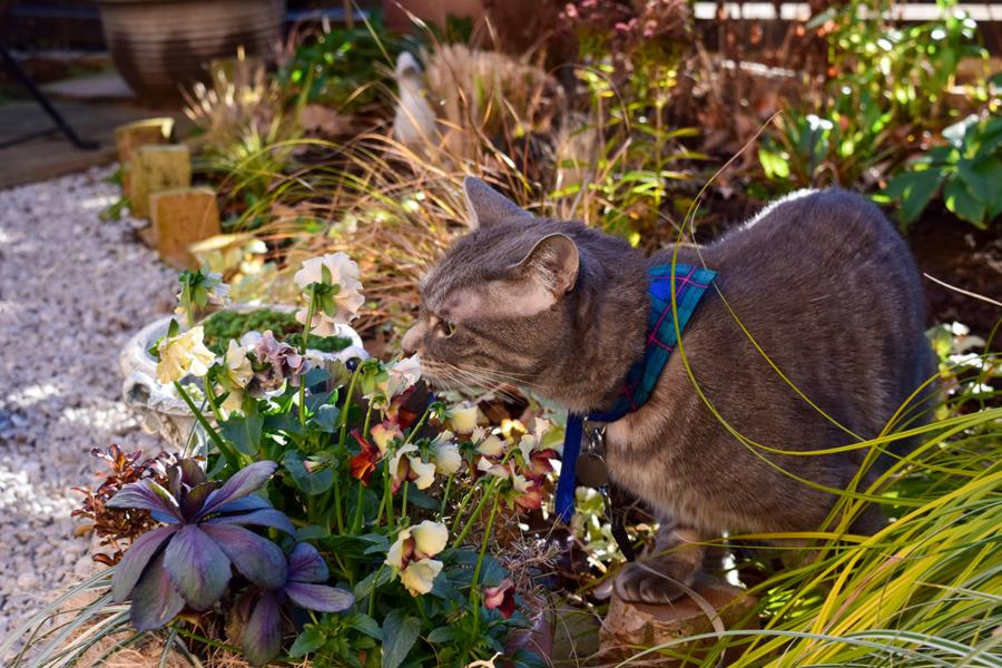 お庭の草をチェックする春太