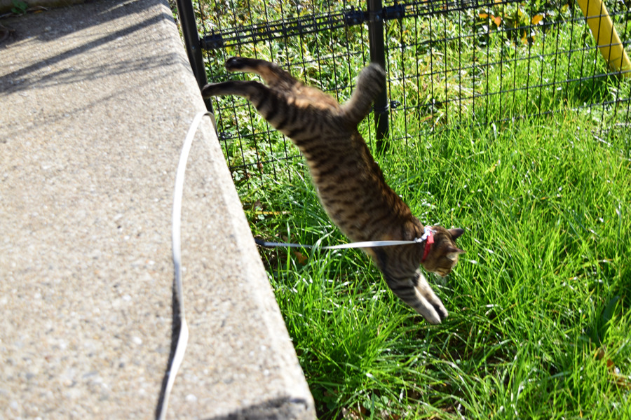 フェンスの下に飛び降りる虎ノ介