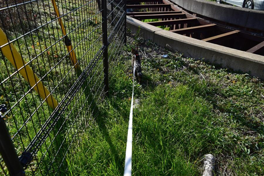 フェンスの下を散策する虎ノ介