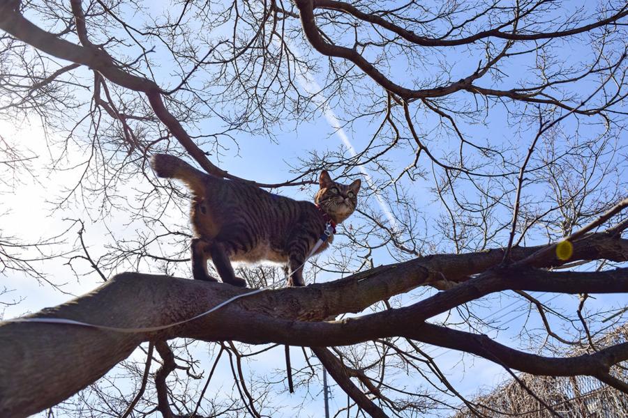 犬から逃げて木の上に登る虎ノ介