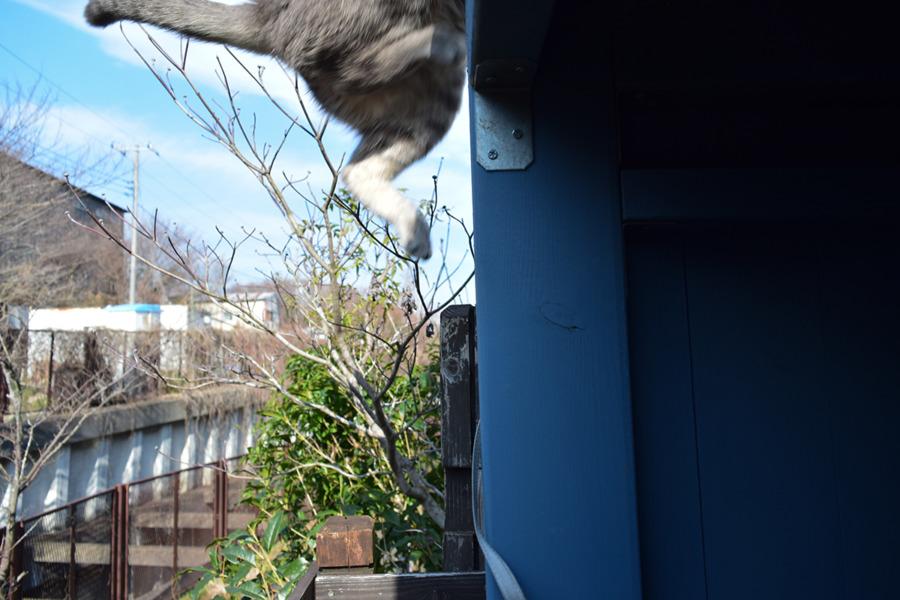 小屋の屋根に飛び乗る春太