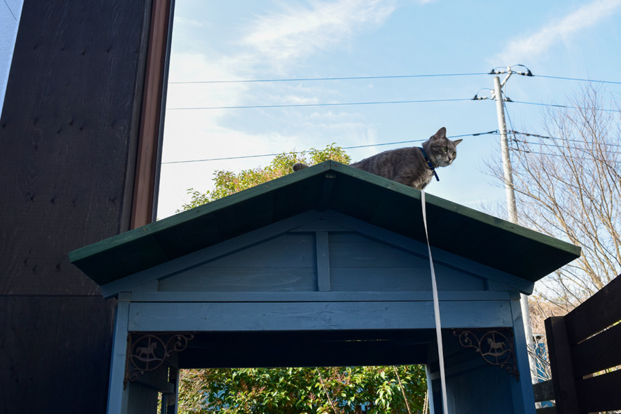 小屋の屋根に上って降りられなくなった春太