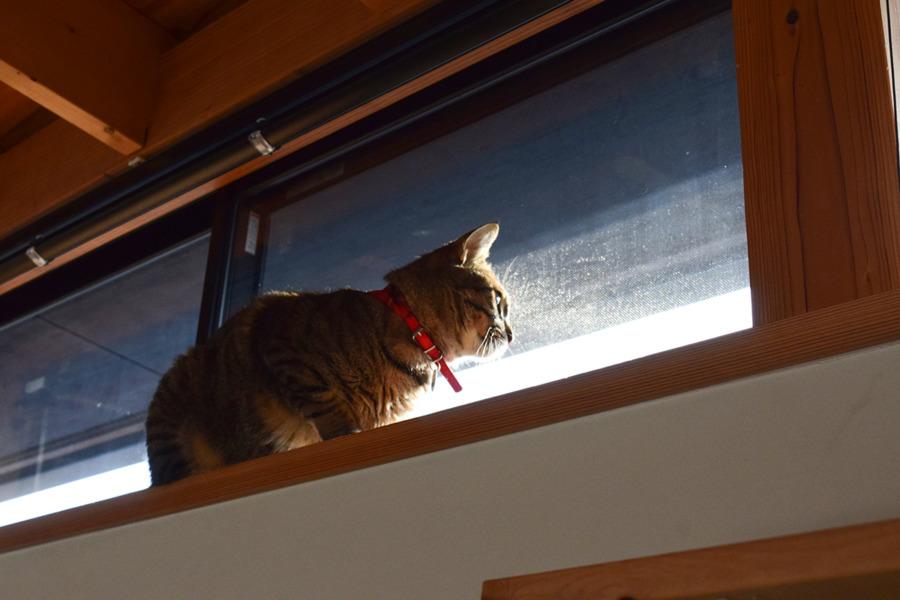 窓から外を見る虎ノ介