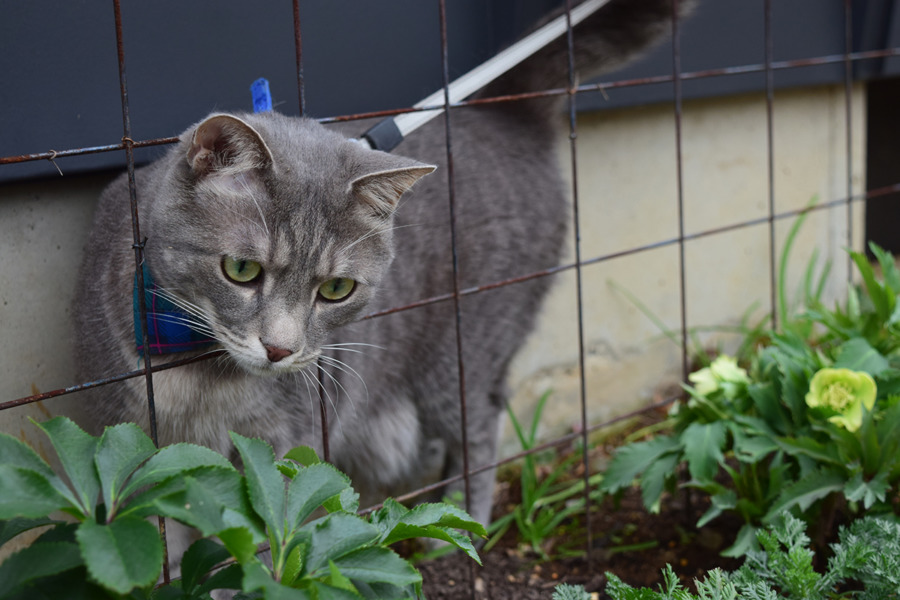 フェンスの隙間から顔をだしてお花をみる春太