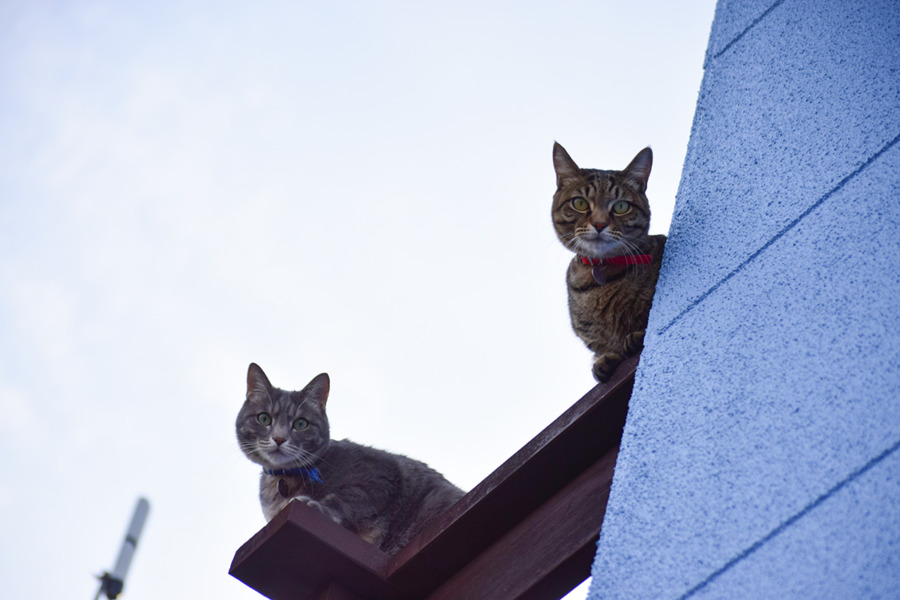 ベランダから外を眺める虎ノ介と春太