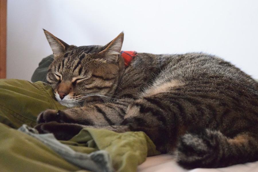 眠る虎ノ介
