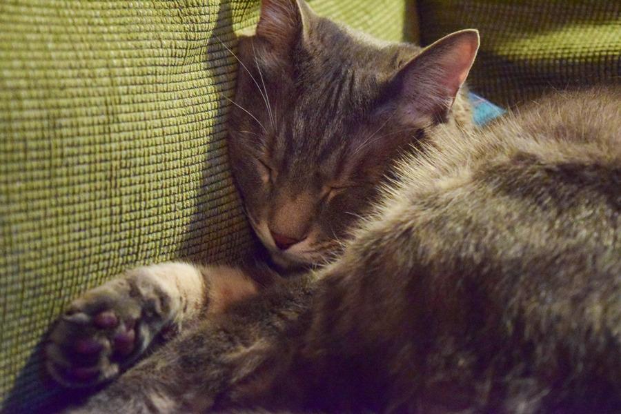 ソファで眠る春太