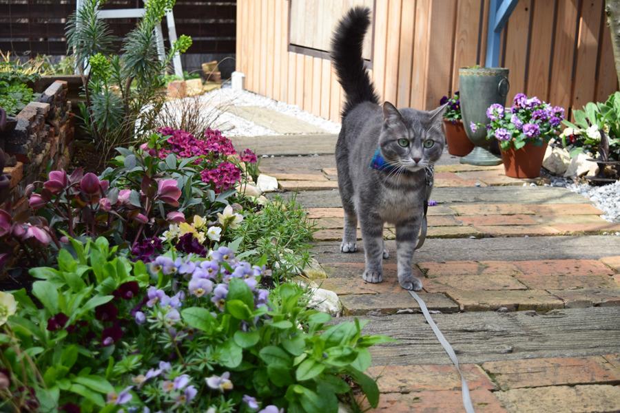 庭を散歩する春太