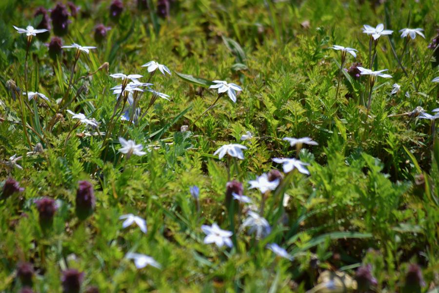 草むらに咲く花