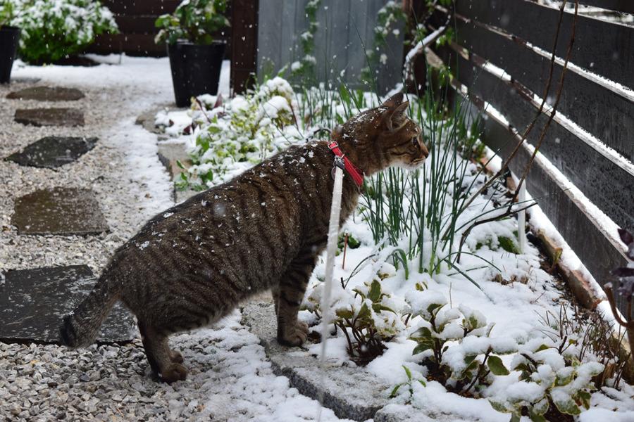 雪の中はしゃぐ虎ノ介