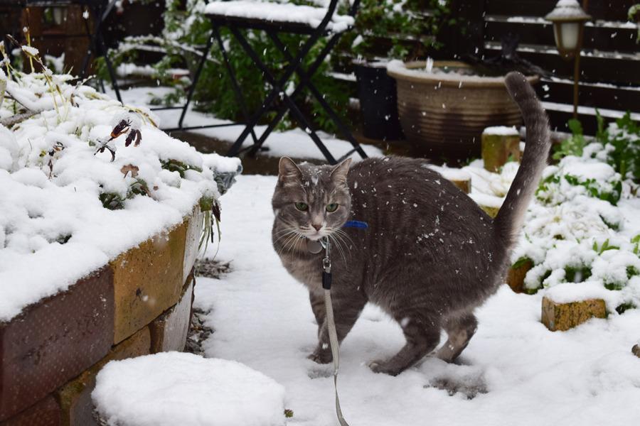 雪の中はしゃぐ春太