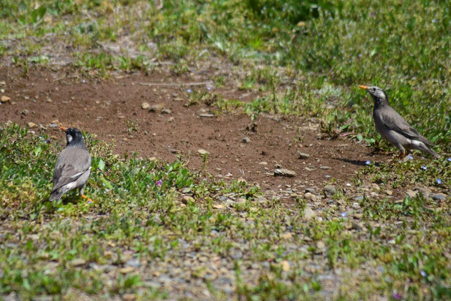 空き地の鳥