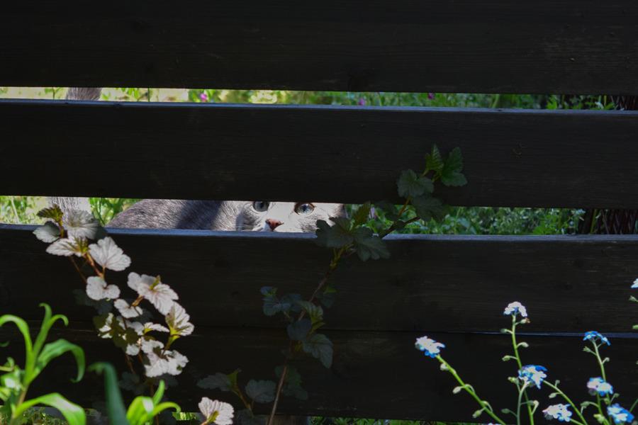 フェンスから虎ノ介を覗く春太