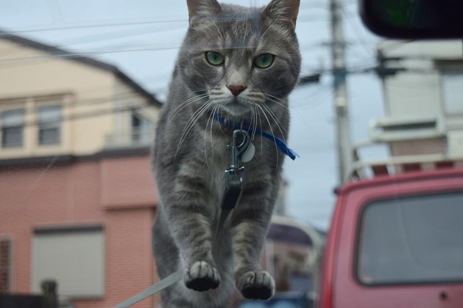 車の中にいる虎ノ介を探す春太