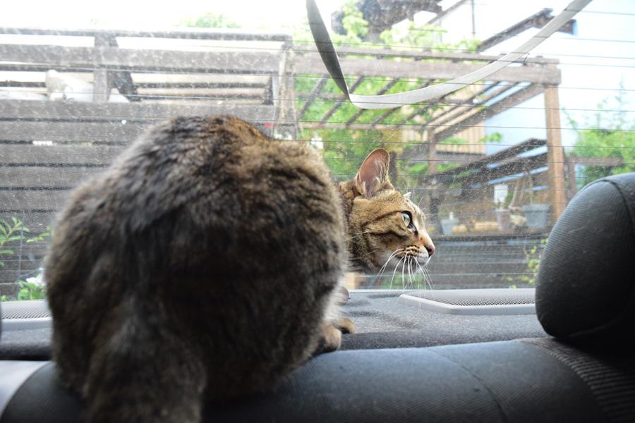 車の中にいるので逃げ道がない虎ノ介