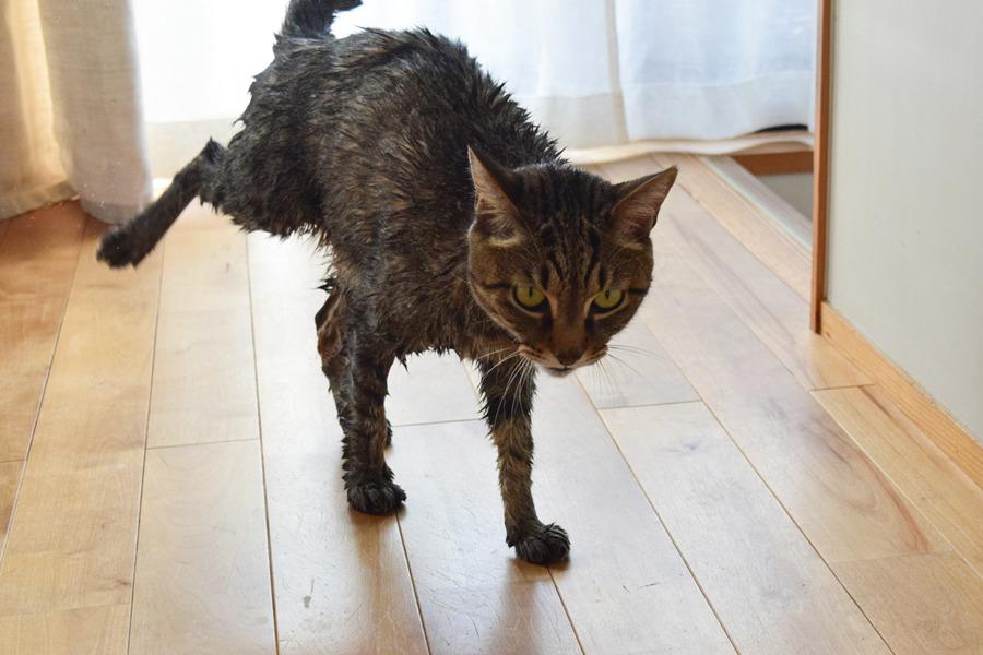 洗濯する虎ノ介