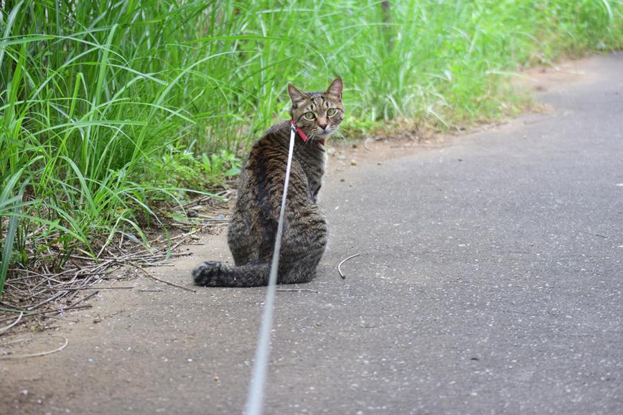 遊歩道にでた虎ノ介