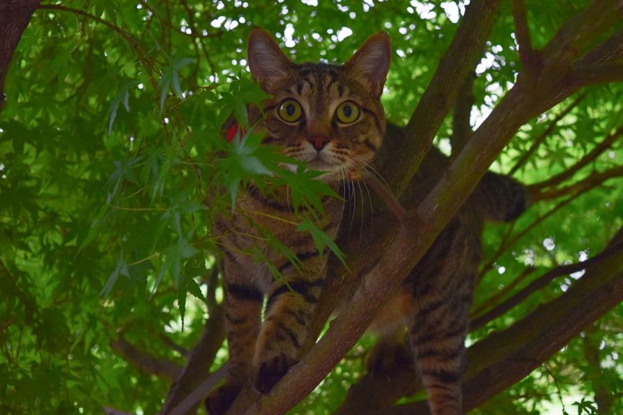 久しぶりに木登りをした虎ノ介