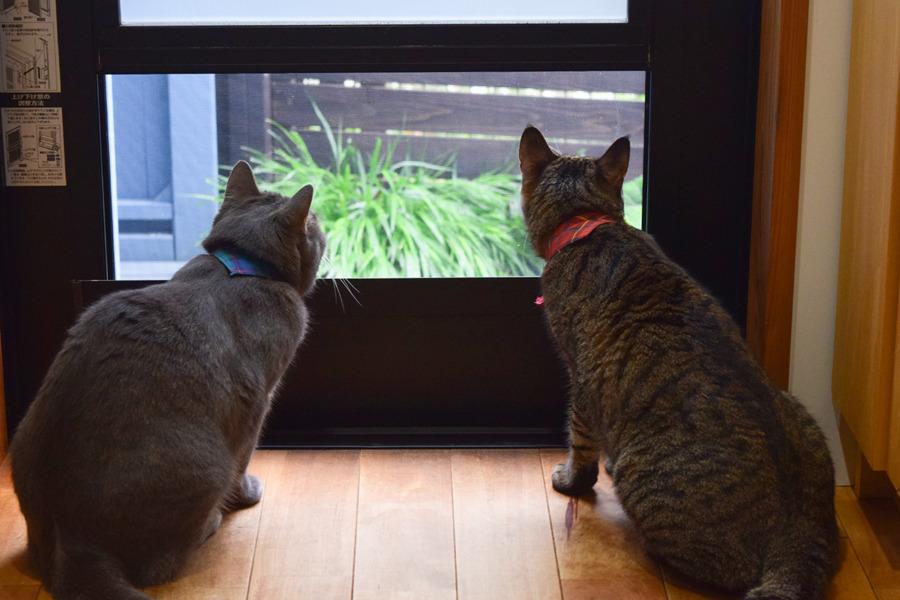 並んで外を見る虎ノ介と春太