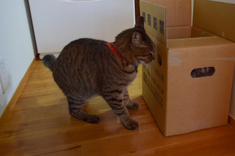 箱の中に隠れる春太を覗く虎ノ介