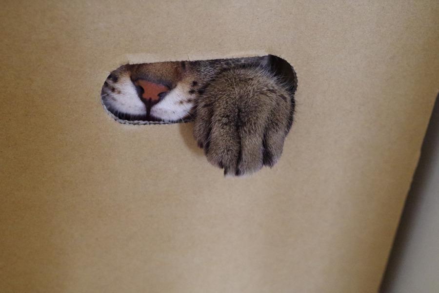 箱の中から手を出す虎ノ介