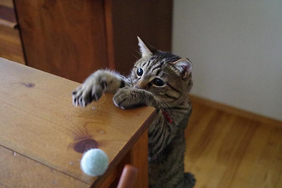 テーブルの上のボールを取ろうとする虎ノ介