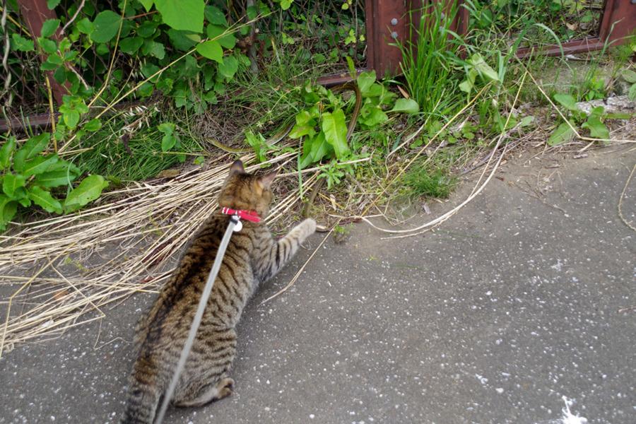 逃げるヘビのしっぽを抑える虎ノ介