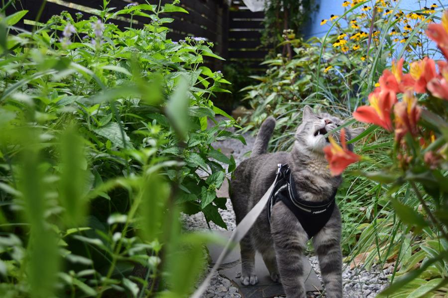 草を食べる春太