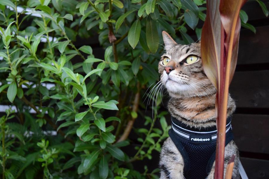 鉢植えの陰から鳥を見つめる虎ノ介