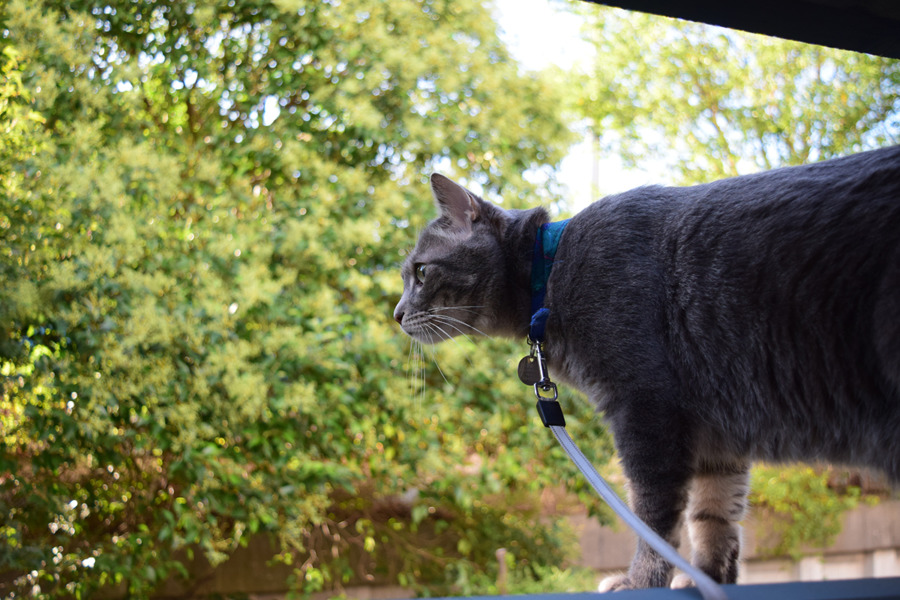 小屋から外を覗く春太
