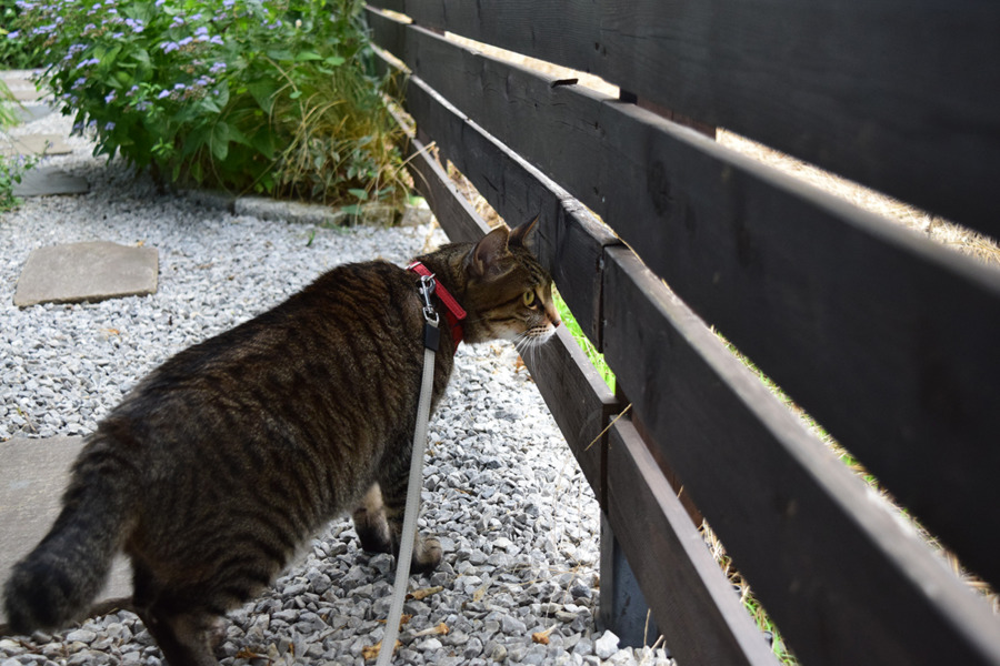 フェンスの向こうを警戒する虎ノ介