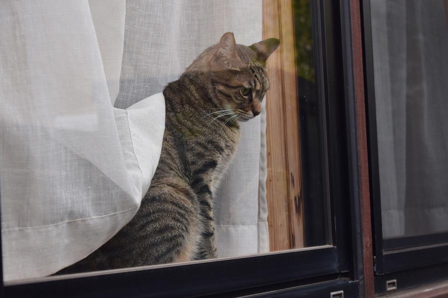 窓から外をみる虎ノ介