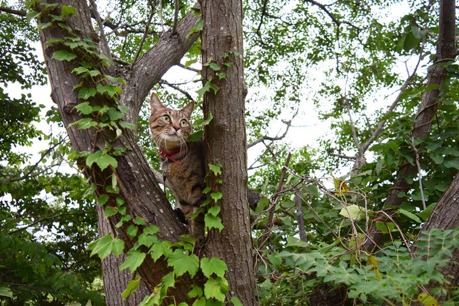 木の上に登って遠くを見る虎ノ介