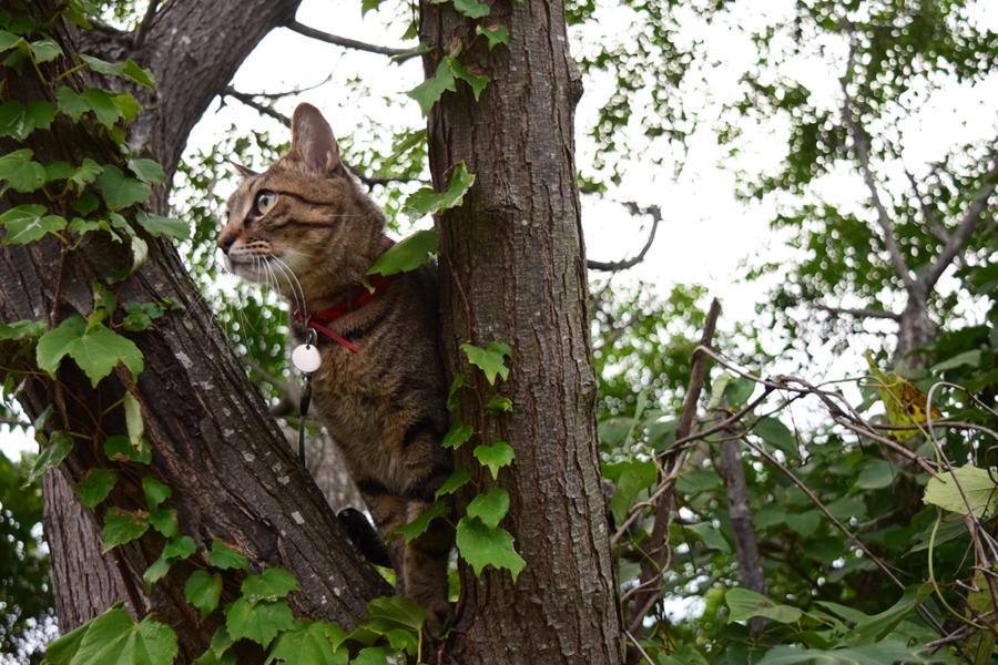 木の上からの景色を楽しむ虎ノ介