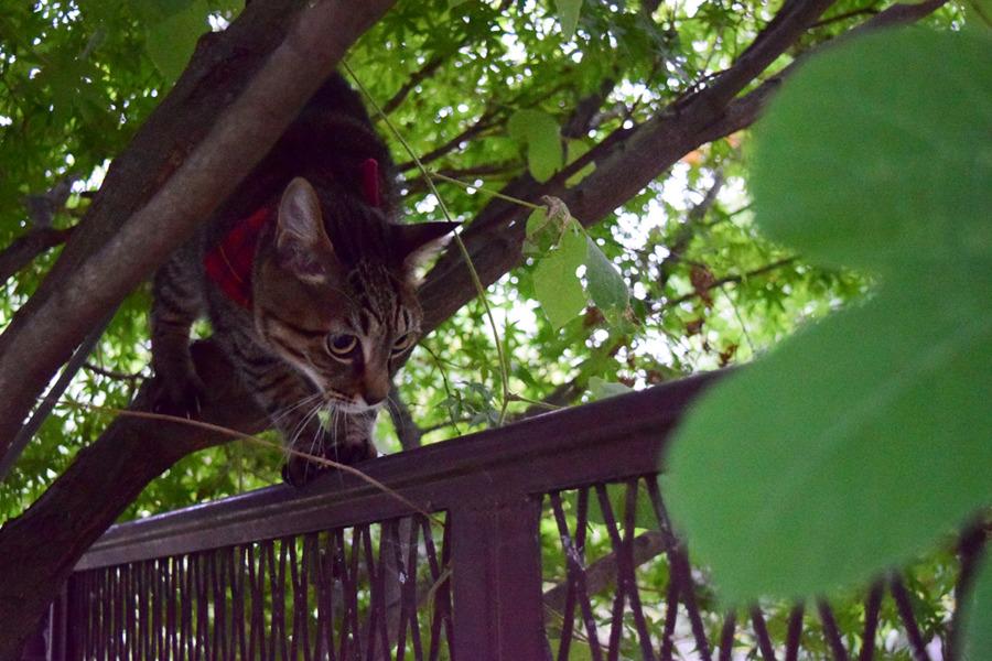 木からフェンスに降りる虎ノ介
