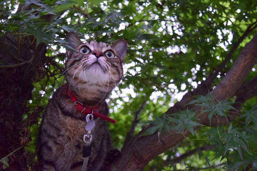 木から鳥を眺める虎ノ介