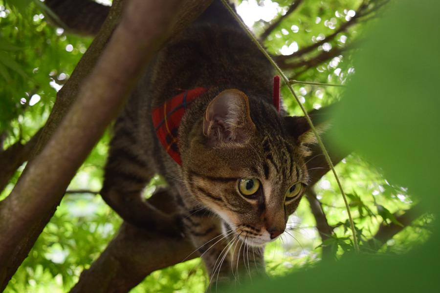 木の上から何かをみつけた虎ノ介