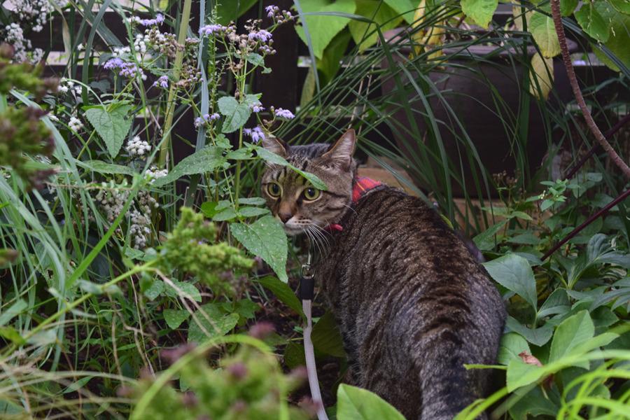 庭に連れてきたバッタに逃げられた虎ノ介