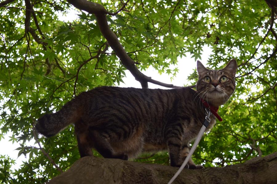 木の上から遠くを見つめる虎ノ介
