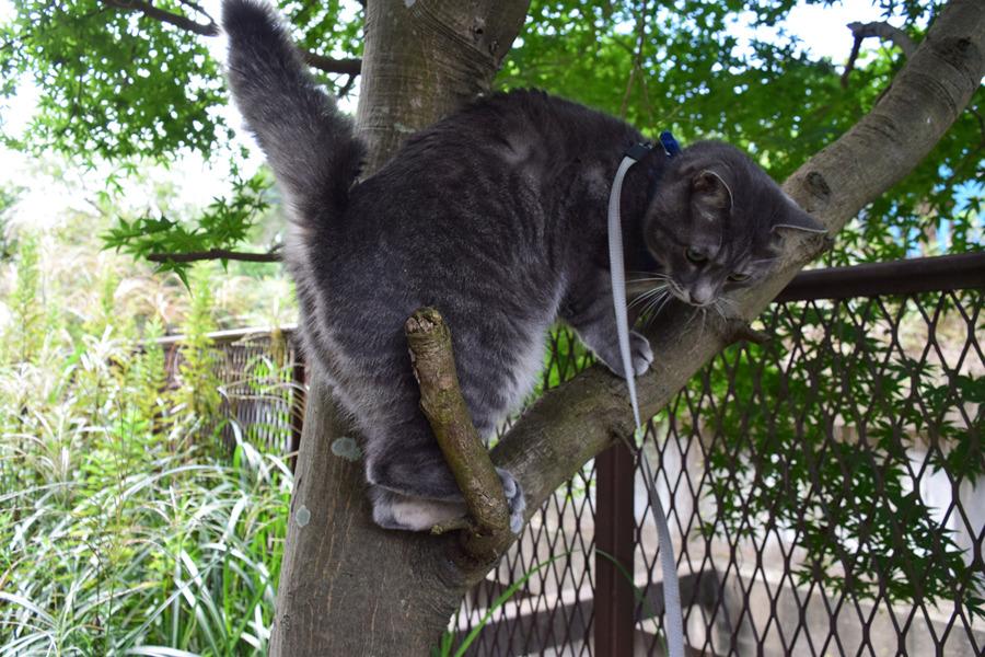 人間に木の上に乗せられた春太