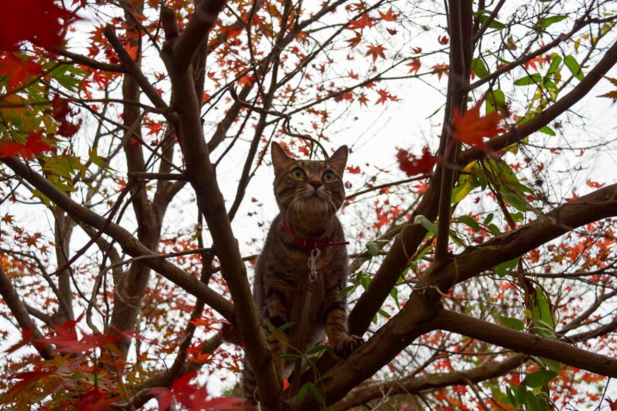 木に登った虎ノ介